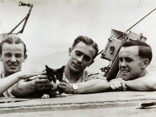 Моряки военного судна подобрали кота среди обломков разрушенного корабля. Они и не догадывались, что о нем уже ходят легенды!