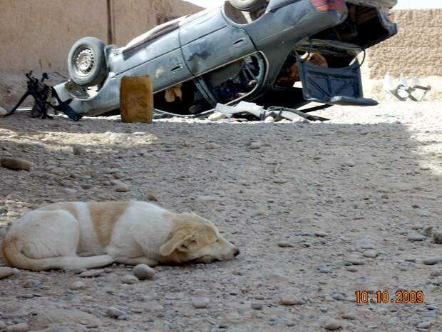 Солдат спас бродячую собаку в Афганистане, не догадываясь, что пёс ответит ему тем же