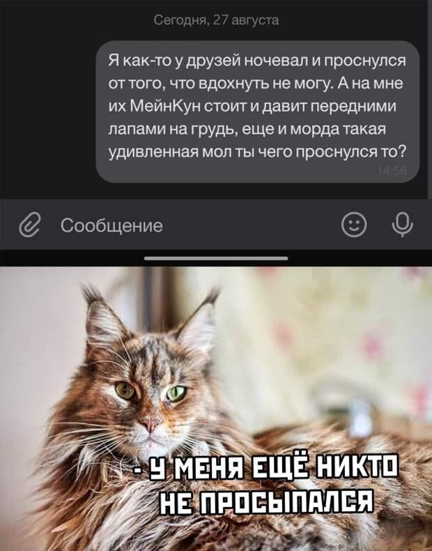 Рассказ про кота Мейнкуна