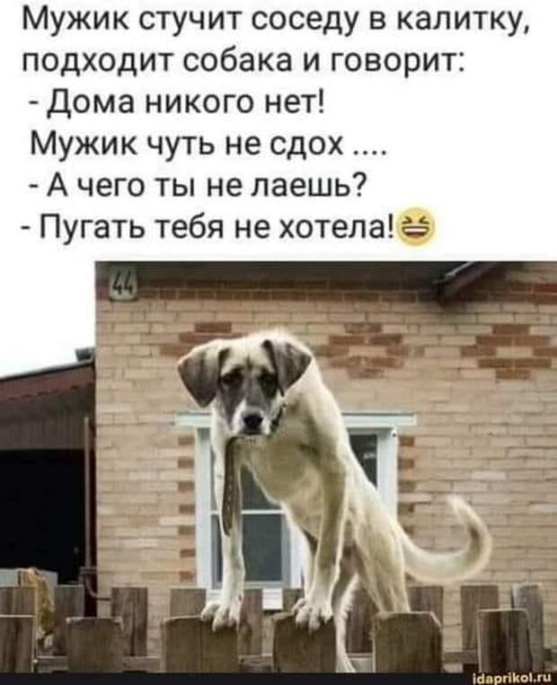 Возможно, это изображение (один или несколько человек, собака и текст «мужик стучит соседу в калитку, подходит собака и говорит: -дома никого нет! мужик чуть не сдох.... -а чего ты не лаешь? -пугать тебя не хотела! idaprikol.ru»)