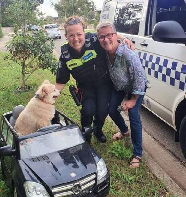 собака с полицейскими