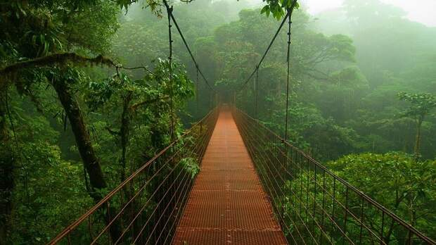 Amazonas14 Большое фотопутешествие по лесам Амазонки