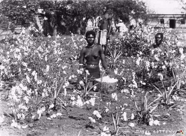 Сесил Родс. «Наполеон Южной Африки»