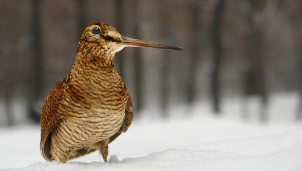 Брачные игры у птиц начались в лесах Подмосковья