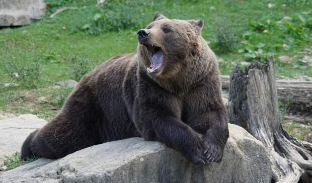«Находится в реанимации»: в лесу Башкирии медведь напал на человека