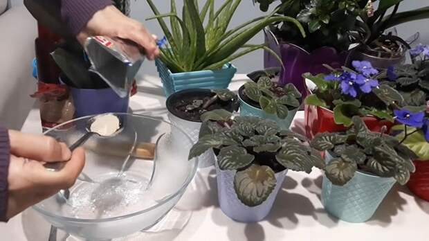 Два простых ингредиента — и ваши цветы поразят вас