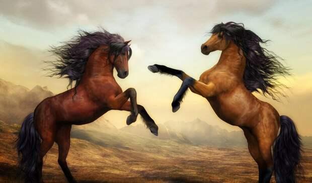 Змеи, кони, тараканы: как вНижегородской области продают животных замиллионы рублей