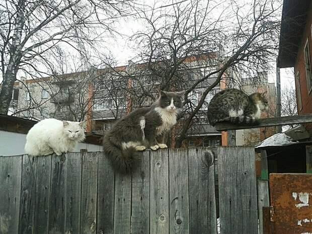 На собрании город, домашние животные, забор, кот, кошка, село, улица, эстетика