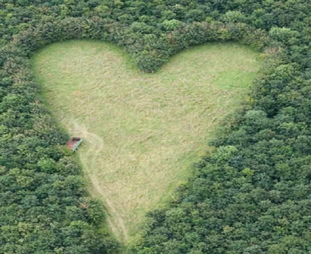 Мужчина посадил 6000 дубов в память о любимой. Через 20 лет все поняли, зачем