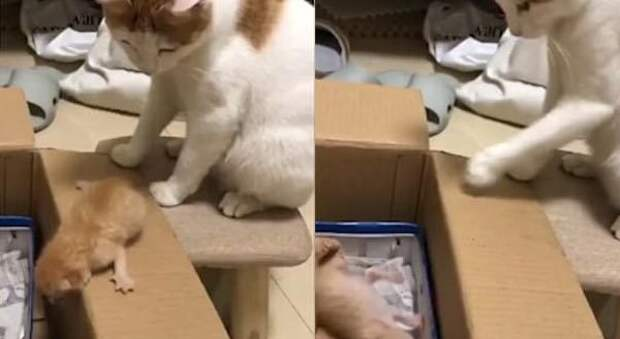 Мама-кошка пришла на помощь котёнку