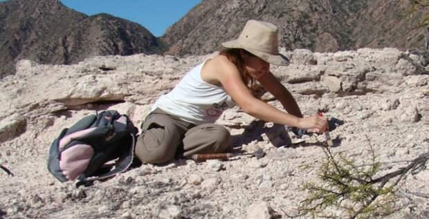 В Аргентине обнаружен новый вид рептилий, живших 230 млн лет назад