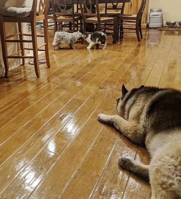Коты и пес