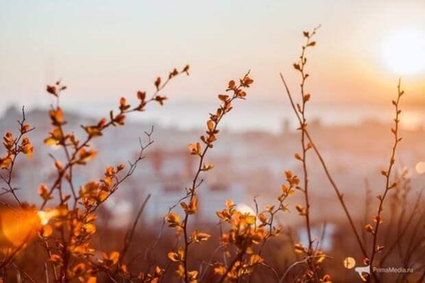 В середине недели в Приморье потеплеет до +24 °С