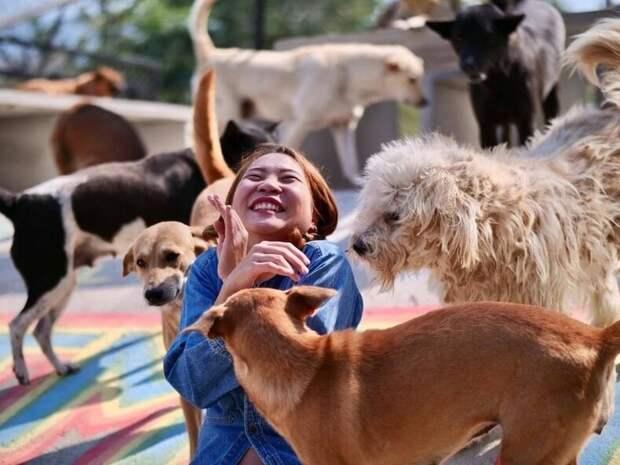 «Человек, который спасает собак»: шведский повар открыл крупнейший в Таиланде приют для уличных животных