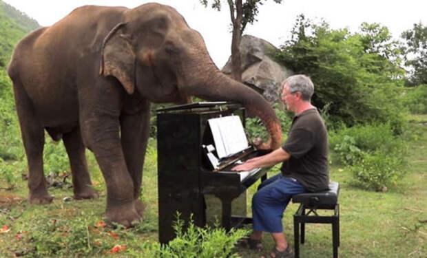 Слепой слон начинает танцевать каждый раз, когда слышит звуки пианино