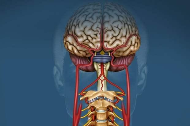 Чем опасно поражение блуждающего нерва