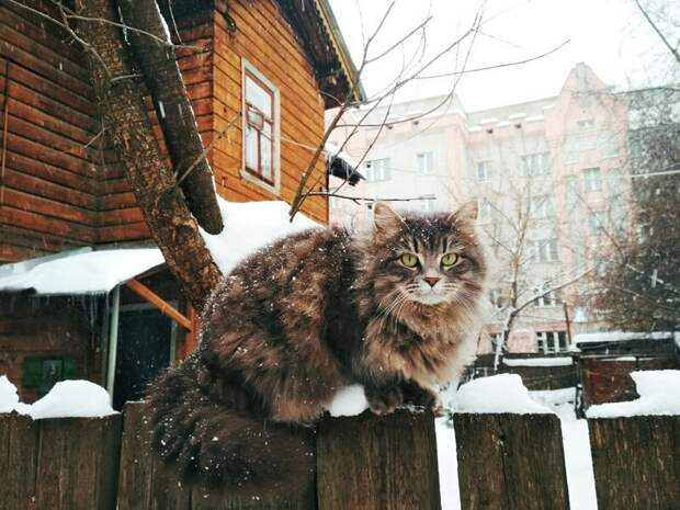 Был бы забор, а кот найдётся! город, домашние животные, забор, кот, кошка, село, улица, эстетика