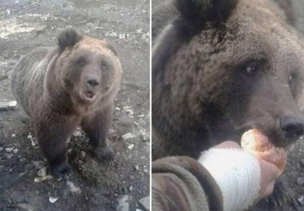 Покормил медведя с рук