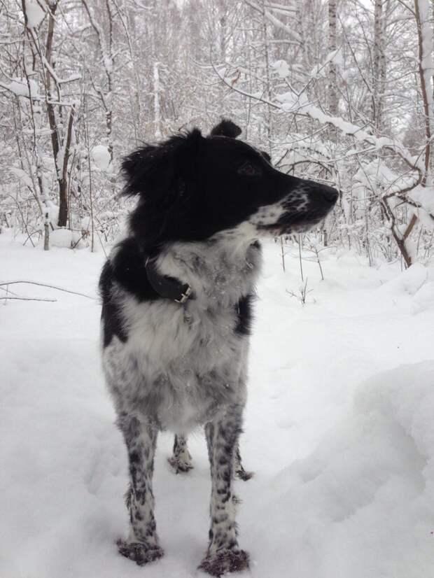 Она панически боялась людей и собак... Сказали, что в приюте ее чуть не загрызли