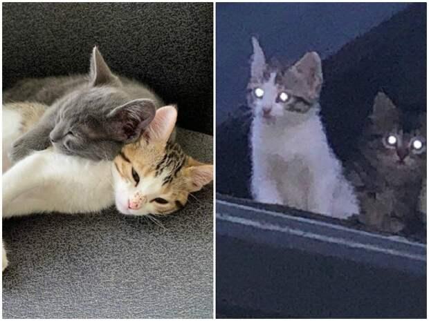 Дружные бездомные котята не выдержали страха, и пришли к людям истории спасения, коты, котята, кошки, помощь животным, спасение животных