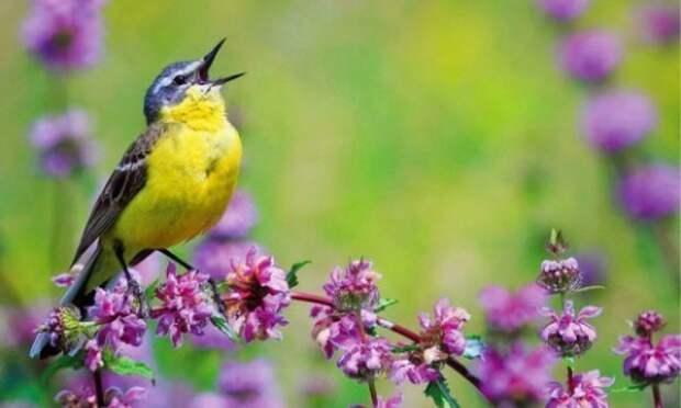 Когда поют птицы – болезни уходят