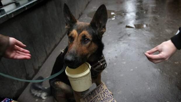 В Москве животным запретят попрошайничать ynews, животные, запрет, москва, новости, попрошайки