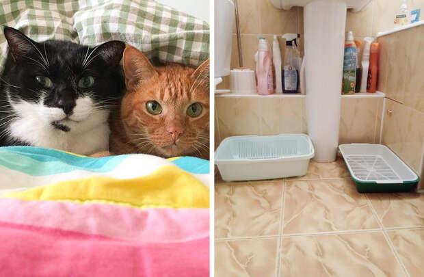 14 вещей, которые нельзя делать при уходе за кошкой