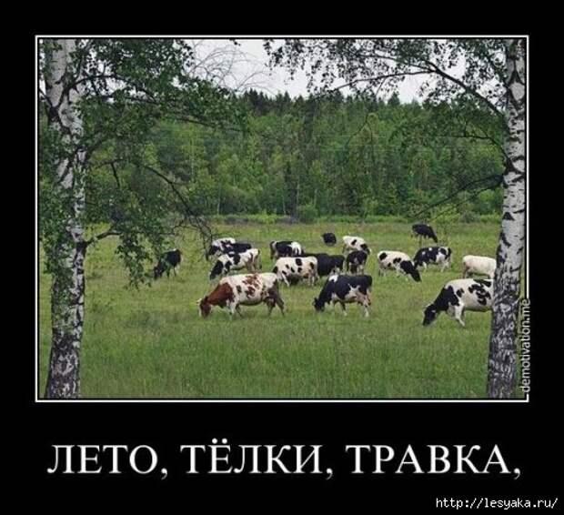 1372745947_novye-demki-3 (500x457, 151Kb)