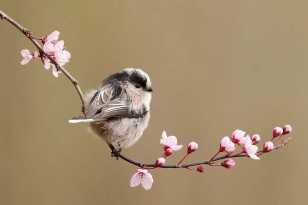 Весна-красна!