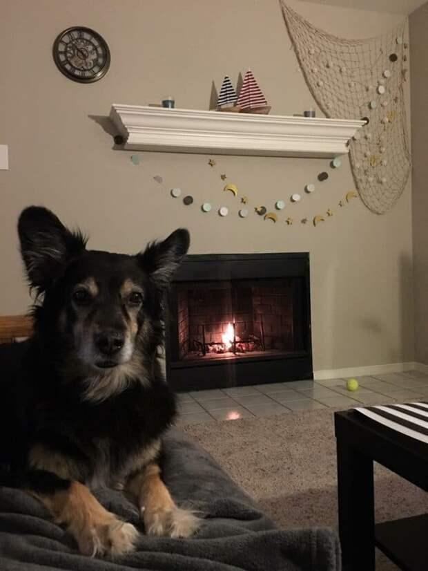 В дом въехал новый жилец, и сразу невзлюбил дворовую собаку! Он убил ее щенков, но одному удалось выжить