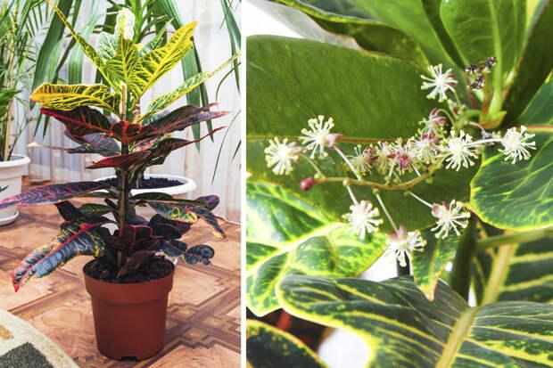 Как цветет алоэ и другие декоративнолистные комнатные растения