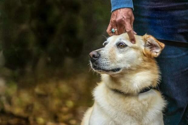 Второе место в категории «Лучший друг человека» великобритания, животные, интересное, конкурс, собака, собаки