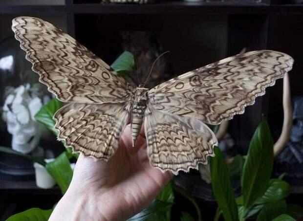 10 самых красивых, удивительных и необычных бабочек в мире