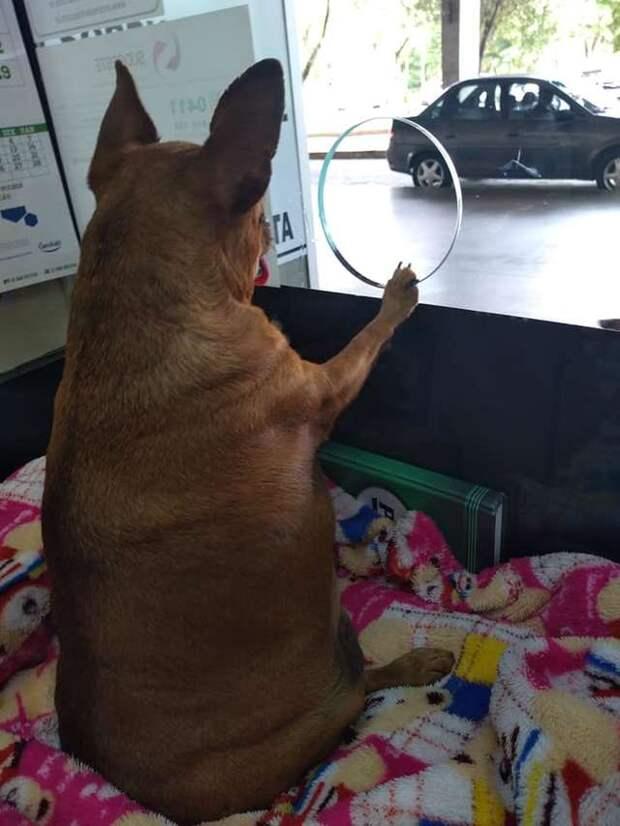 собака в кассе