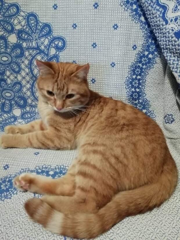 Две кошки с Башиловской нашли новых хозяев