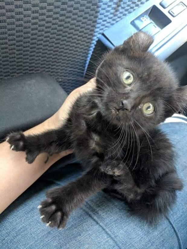 Особенная кошечка осталась одна, но в ее жизни случилось чудо дружба животных, история, история спасения, коты, котята, кошки, спасение животных