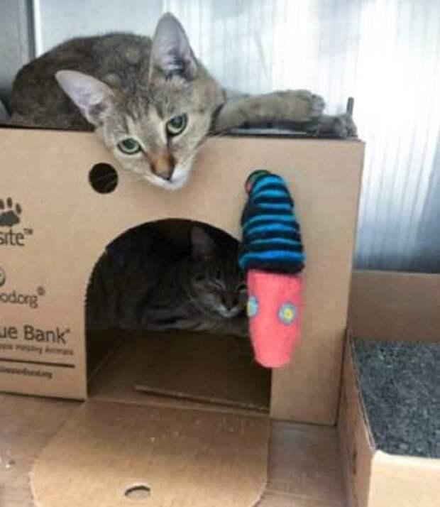 Коты и домик с коробки
