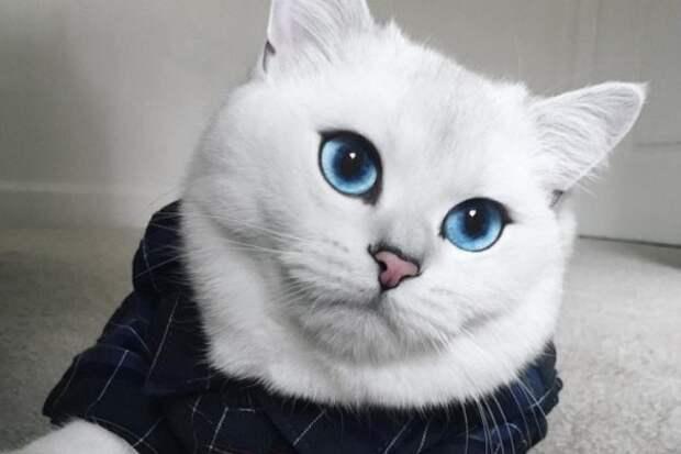 Россия занимает первое место в мире по количеству владельцев котов