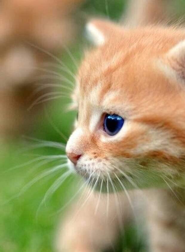 А тут у нас немножко кошек