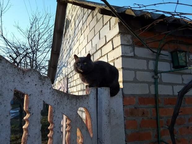 Оглядывая владения город, домашние животные, забор, кот, кошка, село, улица, эстетика