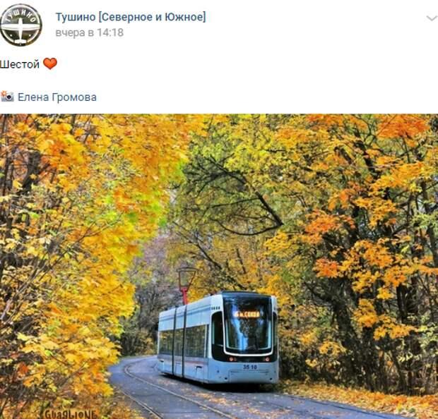 Фото дня: тушинский трамвай в осеннем «золоте»