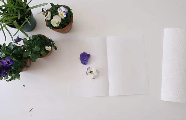 Способ сохранить красоту живых цветов на всегда за одну минуту