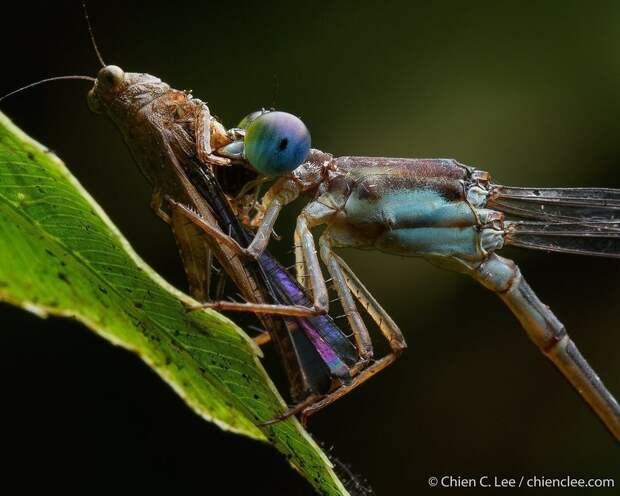Невероятная жизнь растений и животных в тропических лесах Борнео