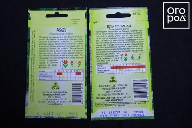 Семена сосны и ели