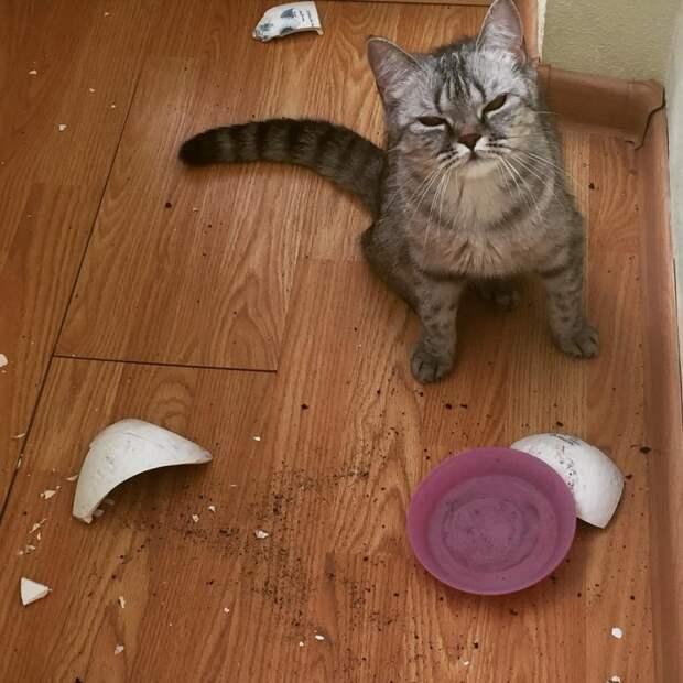 14. Тарелка? Какая тарелка? животные, забавно, кошки, мило, нашкодили, пакостники, собаки, фото