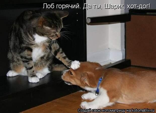 Котоматрица: Лоб горячий. Да ты, Шарик, хот-дог!