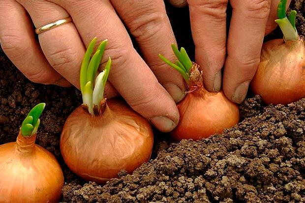 Полное собрание дачных хитростей для садоводов и огородников!