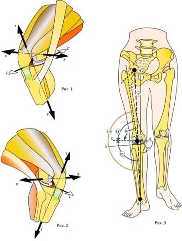 Оси коленного сустава