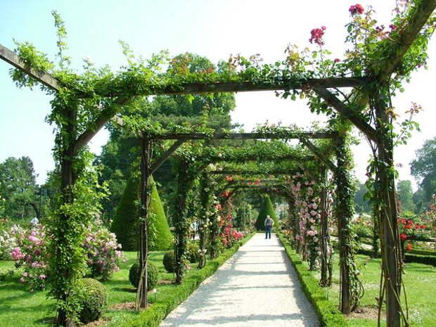 Перголы относятся к числу древнейших садовых конструкций и служат непременным элементом классического розария