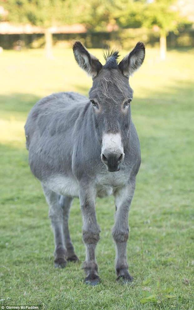 Первыми, кто поселился на ферме у Алана и Ди, были куры. А следом этот замечательный, но строптивый ослик по имени Джек, которого взяли из приюта.